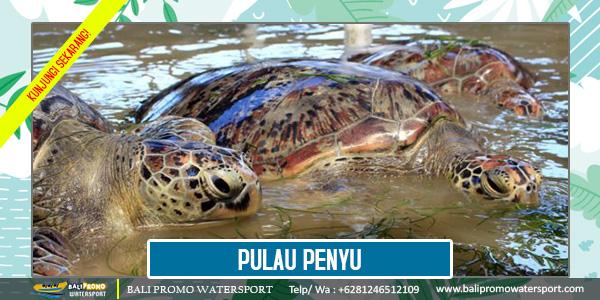 Pulau Penyu di Bali